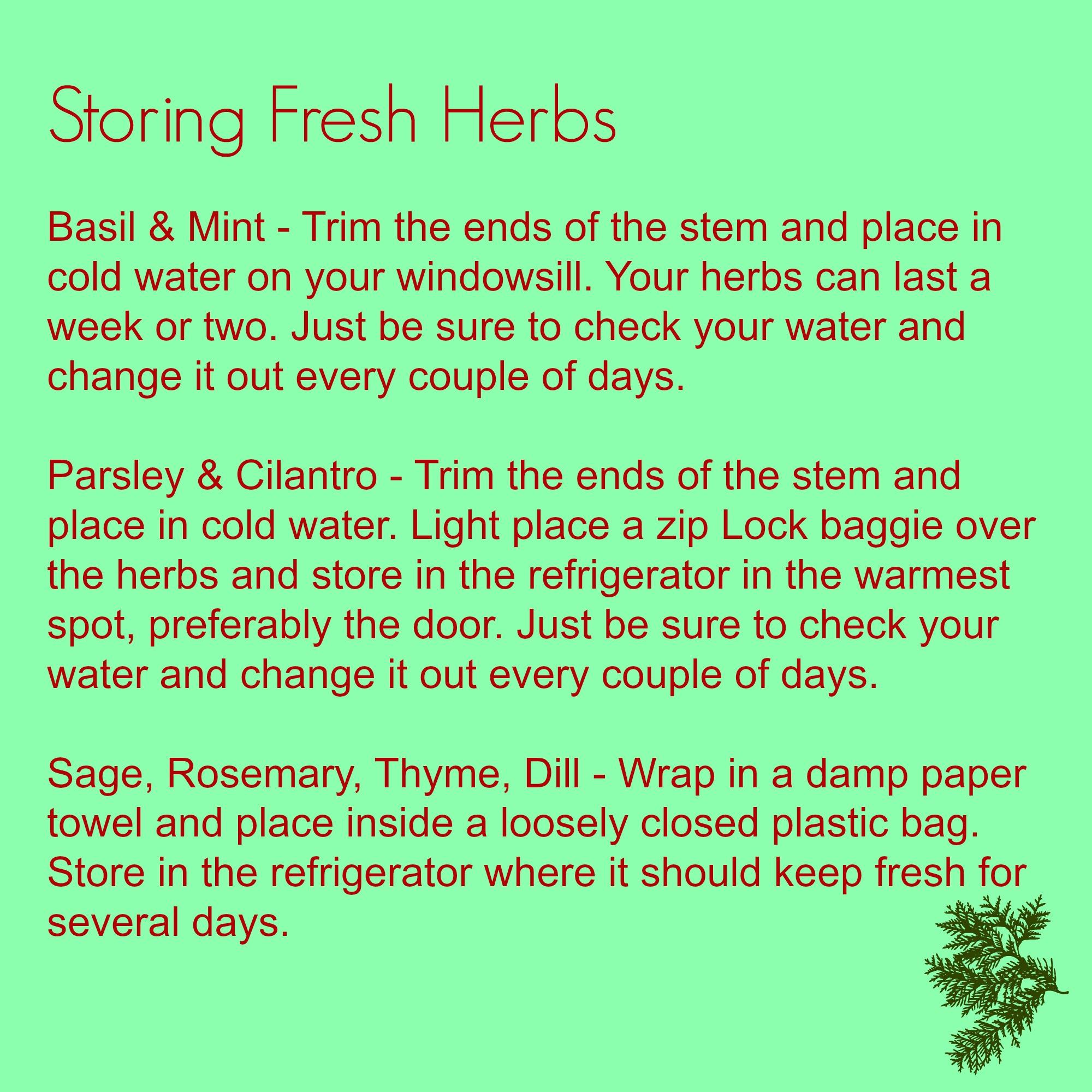 Storing Fresh Herbs